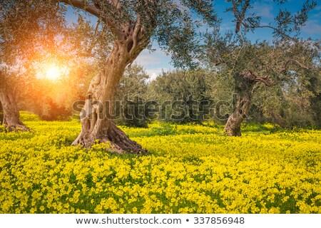 dünya · çiçekler · ayarlamak · çiçek · harita · soyut - stok fotoğraf © bluering