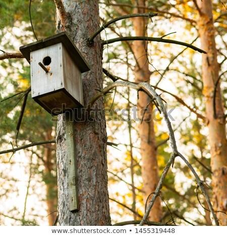 Birdhouse on pine tree branch Stock photo © Lana_M