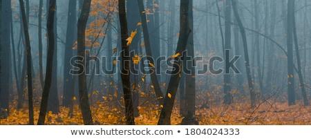 Sonbahar orman duman ağaç Stok fotoğraf © wildman