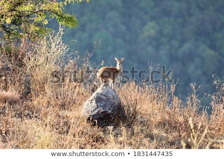 em · pé · rochas · parque · África · do · Sul · viajar · África - foto stock © simoneeman