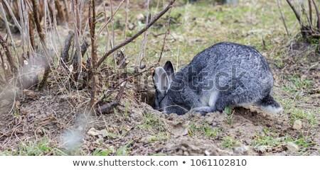Panda królik ogród ilustracja charakter krajobraz Zdjęcia stock © bluering