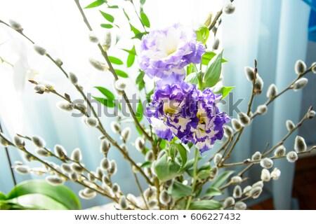 ива ваза вектора Top мнение Сток-фото © kostins