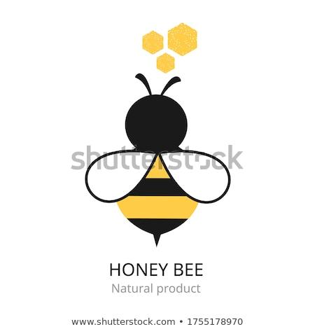 honingbij · hoog · kwaliteit · gedetailleerd · ontwerp - stockfoto © krisdog