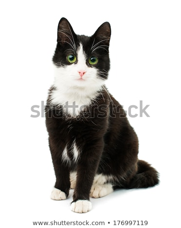 black and white cat stock photo © arenacreative