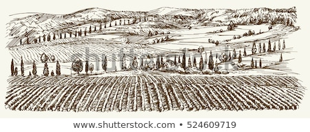 Foto stock: Landscape Of Hills Country Road Cypresses - Vintage