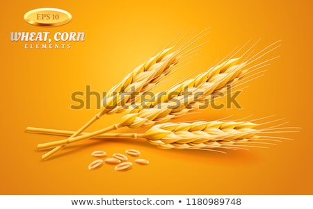 Barley as a staple and grains Stock photo © Ustofre9
