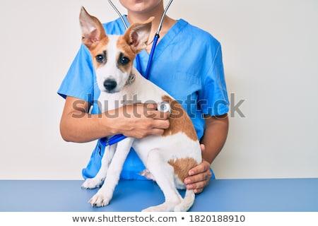 veterinarian doctor holds dog on examination table stock photo © vectorikart