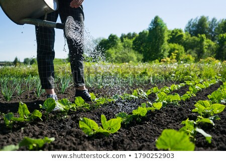Menina jardim ilustração feminino jardineiro em pé Foto stock © lenm