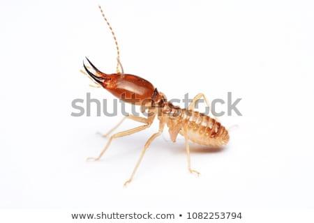 Termit beyaz örnek arka plan hayvan karikatür Stok fotoğraf © bluering