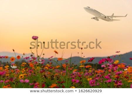 Boeket weide bloemen bloem decoratie Stockfoto © odina222