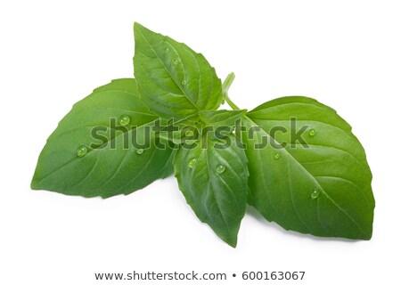 Tailandés albahaca frescos hojas oscuridad Foto stock © maxsol7