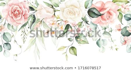 цветок кадр белый Daisy цветы овальный Сток-фото © ElaK