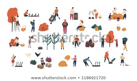 homme · poussant · panier · organique · récolte · agriculteur - photo stock © robuart