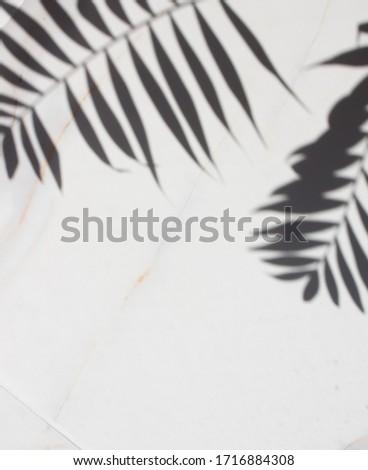 Abstract arte botanico ombre nero marca Foto d'archivio © Anneleven