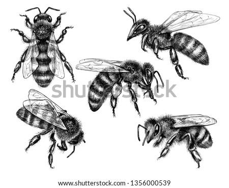 Méh izolált fehér fekete monokróm illusztráció Stock fotó © Hipatia