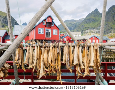 Rorbu house and drying flakes for stockfish cod fish in winter. Lofoten islands, Norway Stock photo © dmitry_rukhlenko