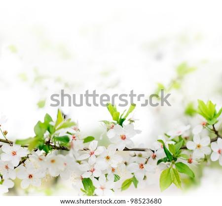 white spring flowers on a tree branch over grey background close stock photo © vkraskouski