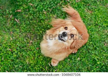 Aranyos kicsi kutyakölyök fű kint legelő Stock fotó © kasto