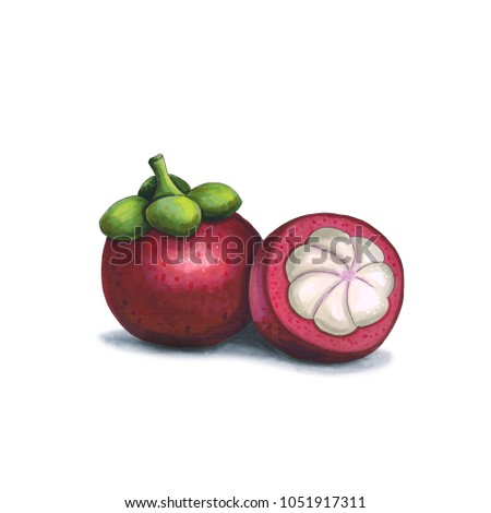 Mangosteen on a white background. Sketch done in alcohol markets Stock photo © user_10003441