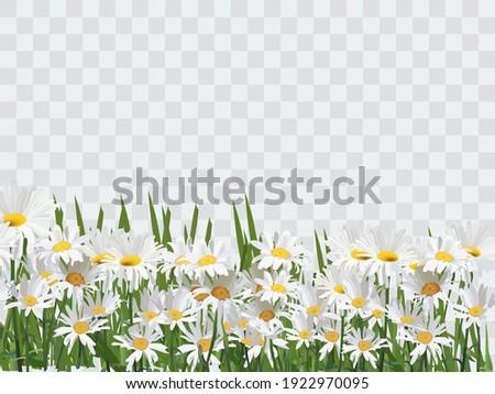 été vente bouquet réaliste Daisy camomille Photo stock © ikopylov
