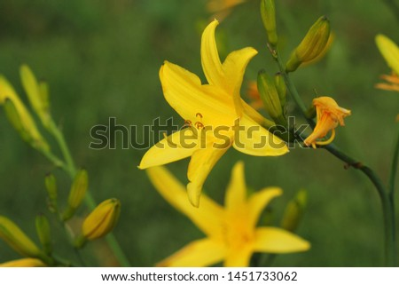 филиала цветок лимона Лилия желтый заварной крем Сток-фото © Virgin