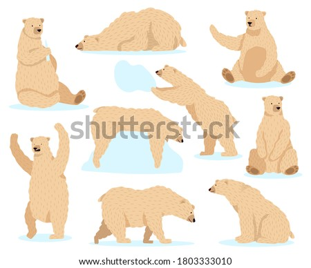 Polar bear sleep isolated. Arctic Wild beast sleep. Vector illus Stock photo © MaryValery