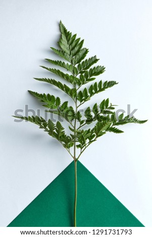 fresh twig fern on a double dark green and gray background with copy space natural composition as a stock photo © artjazz