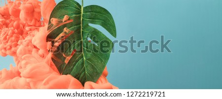 Green leaves Monstera on a color Living Coral background. Creative greeting card. Flat lay Stock photo © artjazz