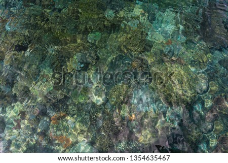 Corals in the shallow water of the sea in Padar Island, Indonesia Stock photo © Kzenon