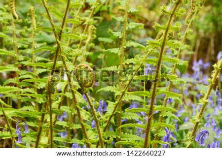 Fiddlehead uncurls at the top of a branch of lush green bracken Stock photo © sarahdoow