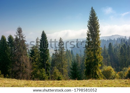 Wonderful autumn landscape. tall trees on hillside with yellow and red foliage in autumn forest on s Stock photo © galitskaya