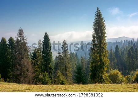 oude · iep · boom · vallen · gouden · najaar - stockfoto © galitskaya