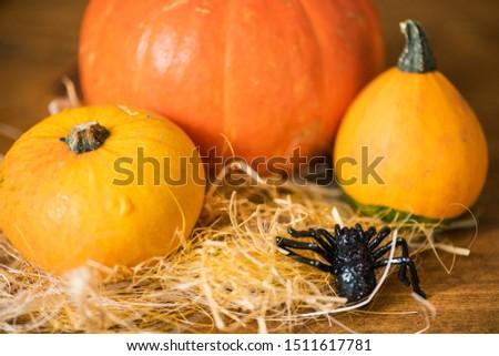Noir jouet araignée trois jaune orange Photo stock © pressmaster