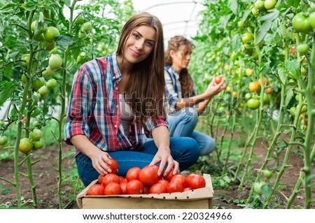 Kezek kettő fiatal gazdák szőlőszüret piros Stock fotó © pressmaster