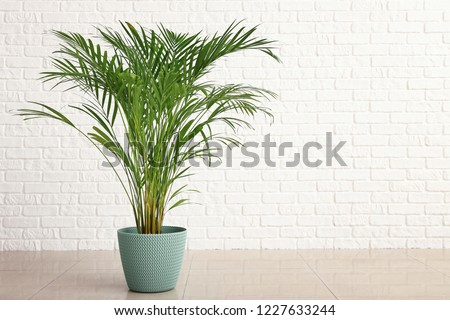 Plant in Pot with Big Green Leaves, Houseplant Stock photo © robuart