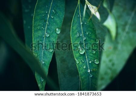 Sempre-viva fresco ramo naturalismo planta sombras Foto stock © artjazz
