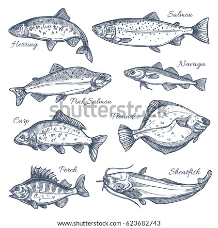 Hand drawn vector fish. Fish and seafood products store poster. Sea food fishery and ocean fishing c Stock photo © designer_things
