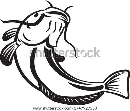 European Catfish or Wels Catfish Going Up Black and White Stock photo © patrimonio