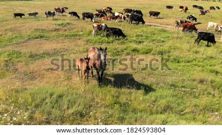 horser view outdoors eating grass in the meadow landscape nature stock photo © lunamarina