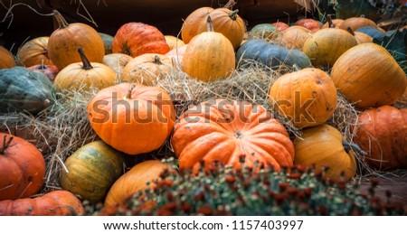 Halloween nagy sütőtök tökök ősz aratás Stock fotó © juniart