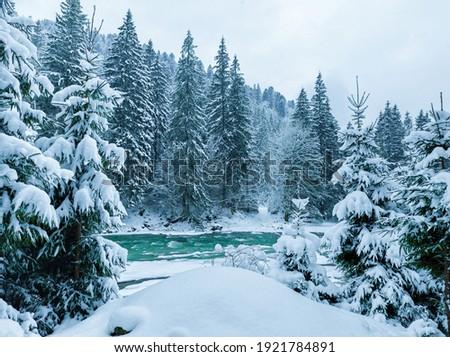 Beautiful calm winter day. Carpathians. National park Stock photo © tekso