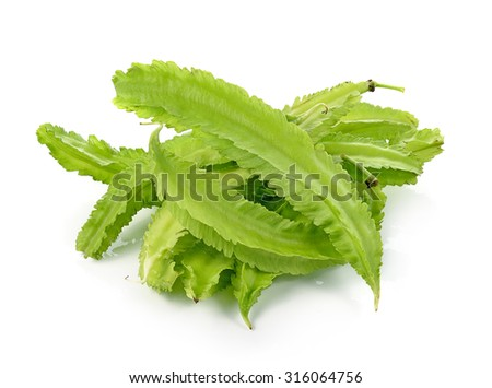 Winged bean isolated on white background. (Psophocarpus tetragon Stock photo © ungpaoman