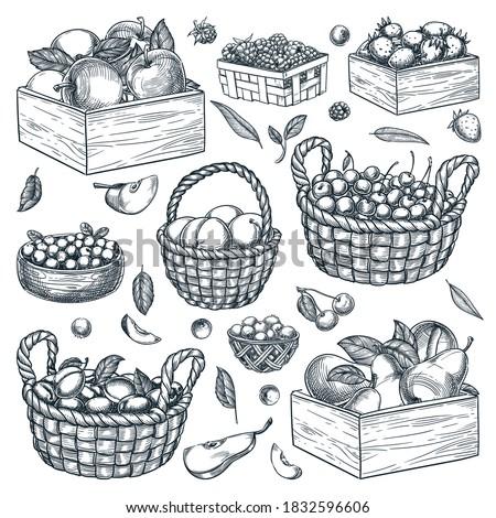 Stockfoto: Vers · ruw · organisch · bessen · witte · vintage