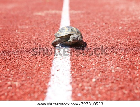 turtle walking down a track for running in a concept of racing or getting to a goal no matter how lo Stock photo © galitskaya