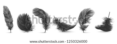 White feathers set collection Vector realistic. Different falling twirled feathers isolated on trans Stock photo © frimufilms