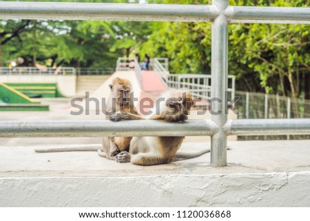 Two monkeys sit on a sports field and look for fleas from each other Stock photo © galitskaya