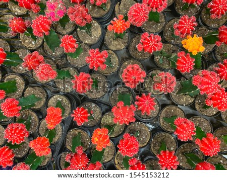 Abstract Overhead of Various Colorful Succulent Plants At Nurser Stock photo © feverpitch