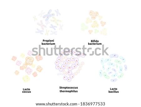 Set of five different types of probiotics like Bifidobacterium, lactobacillus, streptococcus thermop Stock photo © evgeny89