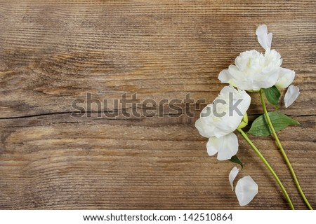 Pure white peony flowers as floral art background, wedding decor and luxury branding Stock photo © Anneleven