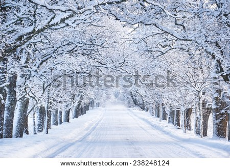 Winter landscape - alley in forest, trees with snow-covered branches Stock photo © galitskaya